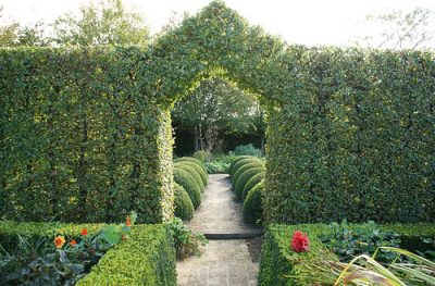 Evergreen hedges, edging and screening