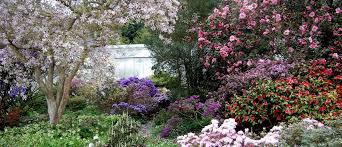 Rhododendrons taking centre stage.