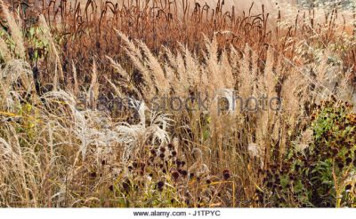 Seed-heads in the Autumn Garden