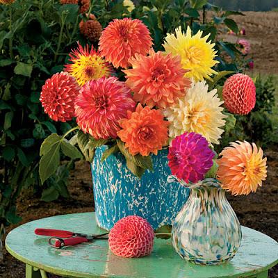 Vibrent late summer flowers
