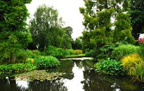 A large pond with native planting