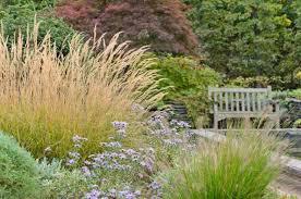 glorious grasses