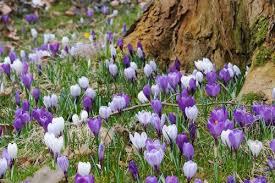 spring splendider