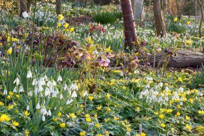 the spring woodland garden.