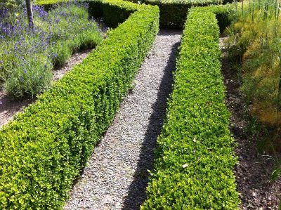 small hedges, for edging.