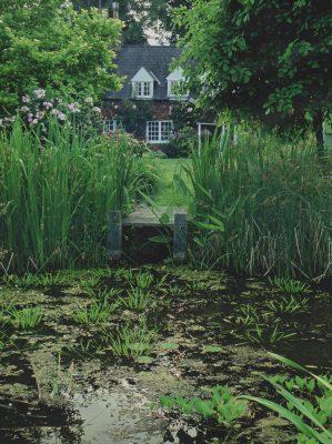 A wildlife Pond created by Arcadia Garden Design.