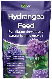 Stunning Hydrangeas, make great cut flowers