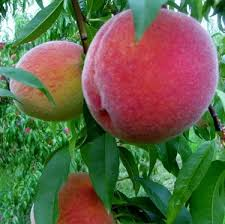 Peach Rochester