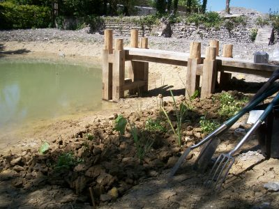 planting marginal aquatics