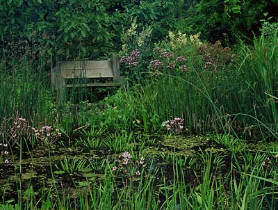 Wildlife garden pond