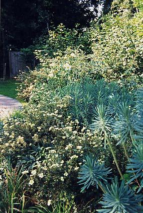 Garden for a public building