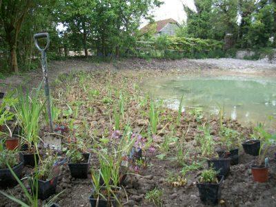 planting bog plants