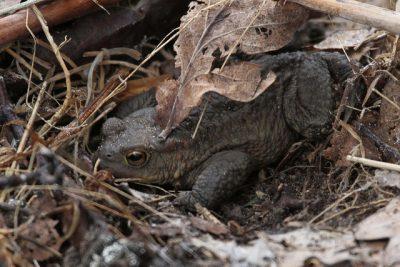 toad hibination habitat.