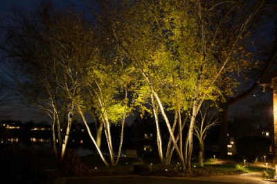Trees up-lit
