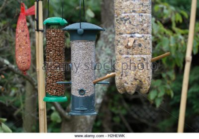 a selection of bird feeders