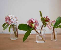 Bringing Daphnes indoors, to enjoy the scent.