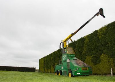 cutting a tall Hedge.