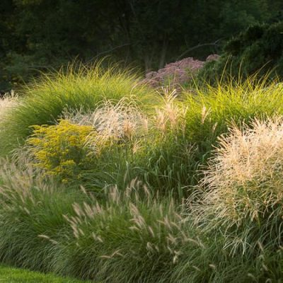 Sweeps of glasses make a dramatic planting.