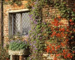 Clematis and Chaenomeles on a wall