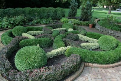 different Evergreen hedges