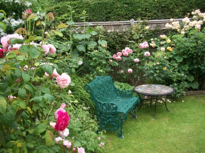 by Arcadia, A Cottage Rose garden