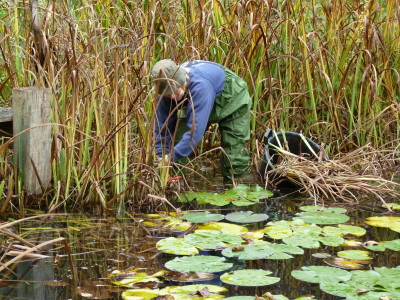 autumn pond maintenance
