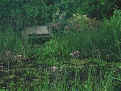 by Arcadia, wildlife pond, Tonbridge Wells.by Arcadia, wildlife pond, Tonbridge Wells.