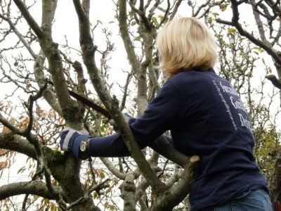 careful pruning